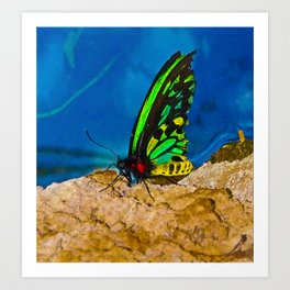 Black and Green Butterfly Art Print