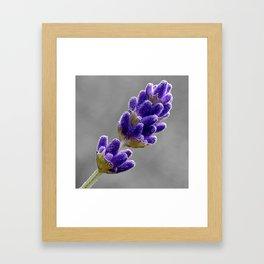 Lavender Photo Framed Art Print