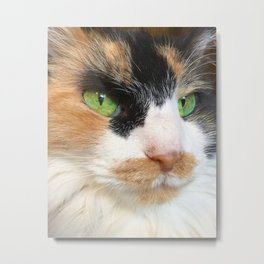 Calico With The Big Green Eyes Metal Print