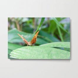 Cruiser Butterfly Metal Print