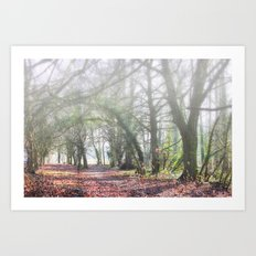 Enchanted Woodland Art Print