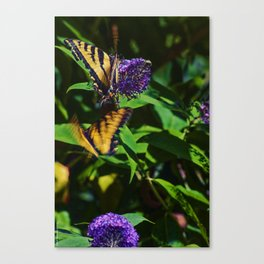 Swallowtails in the Bush Canvas Print