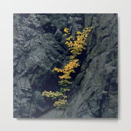 Manifesting HOPE in the Midst of 'Rocky' Places Metal Print