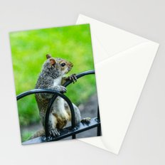 Lonely Squirrel Stationery Cards