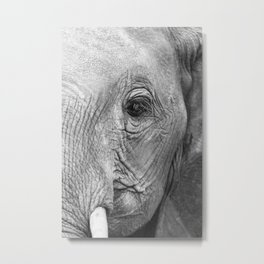 Elephant's watch Metal Print