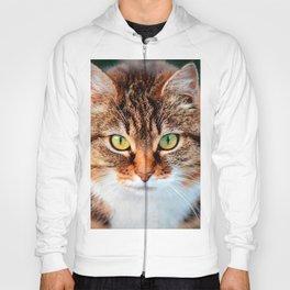 Portrait of Manx Cat Green-Eyed Hoody