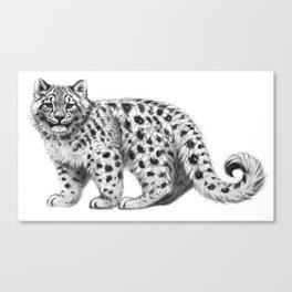 Snow Leopard cub g142 Canvas Print