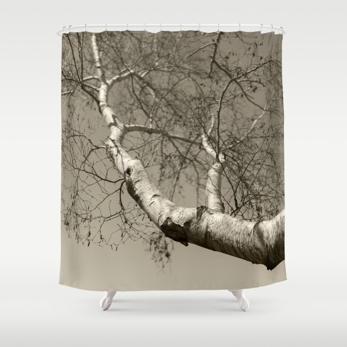Birch Tree 01 Shower Curtain
