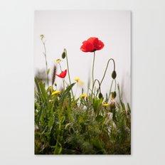 Spring Flora 1086 Canvas Print