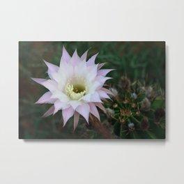 Pale White Pink Cactus Flower Metal Print