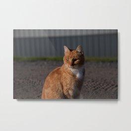 A Very Good Cat Metal Print