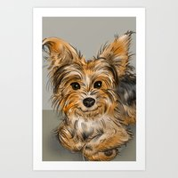 yorkie Art Prints featuring Yorkie by Sam Bock