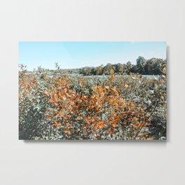 Autumn Scenes V Metal Print