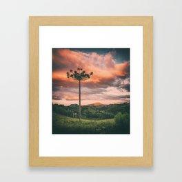 Araucaria Sky Framed Art Print