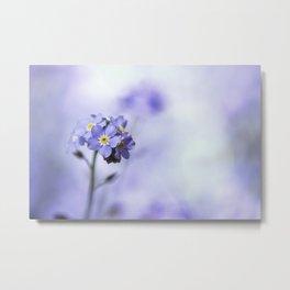 Forget-Me-Not - Vancouver - Myosotis Flower Metal Print
