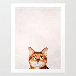 Cute Cat Stare Art Print