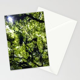 Sunlight Filtering through Ferns and Palm Trees in the Lush Rainforest of Mombacho Volcano, Nicaragu Stationery Cards