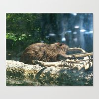 beaver Canvas Prints featuring beaver by Gary Michael Miller