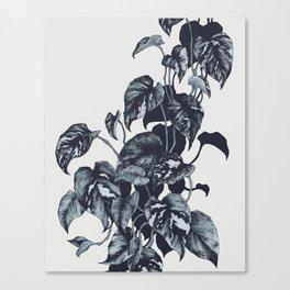 Pothos Canvas Print
