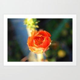 Sunrise Cactus Bloom Art Print