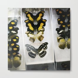 Butterfly Case - Color Metal Print