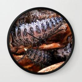 Watercolor Beetle, Pleasing Fungus Beetle Larvae 01, RMNP, Colorado Wall Clock