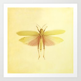 Vintage Inspired Pastel Yellow Salmon Butterfly Art Print