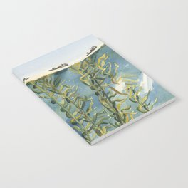 Kelp Forest Notebook