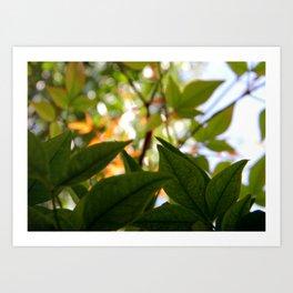 Macro Leaves Art Print