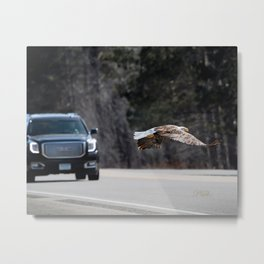 March Eagle over the highway Metal Print