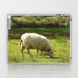 Grazing White Sheep Laptop & iPad Skin