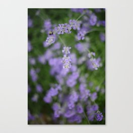 Bees and Lavander Canvas Print
