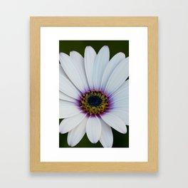 Blue Eyed Daisy II Framed Art Print