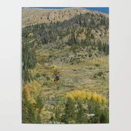 Colorado Mountain Side Poster
