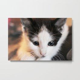 Poptarts the Kitten  Metal Print