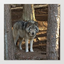 Forest Timber Wolf Canvas Print