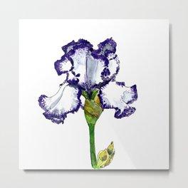 Purple and White Bearded Iris Metal Print