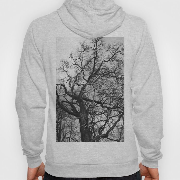 Old oak tree. Moscow district. Hoody