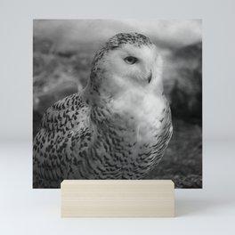 Snowy Owl - B & W Mini Art Print