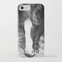 harley iPhone & iPod Cases featuring Harley by Yanina May Photography