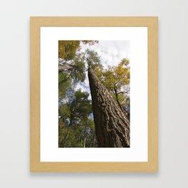 Canopy Sky 2 * Linville Framed Art Print