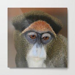 Monkey 2014-1001 Metal Print