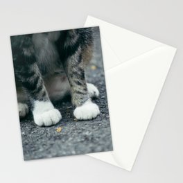 Cat in White Socks Stationery Cards