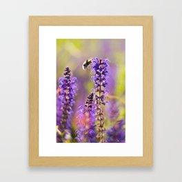 Lavender, Bees and Dreams Framed Art Print