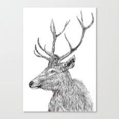stag n.1 Canvas Print