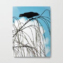 Cawing Crow Metal Print