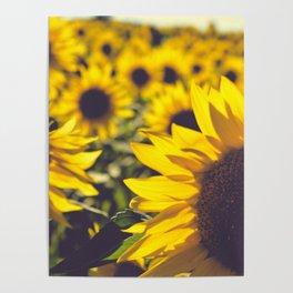 Summer Sunflower Love Poster