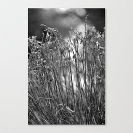 Dry grass Canvas Print