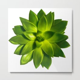 MINI SUCCULENT Metal Print