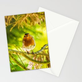 Curious Robin Stationery Cards